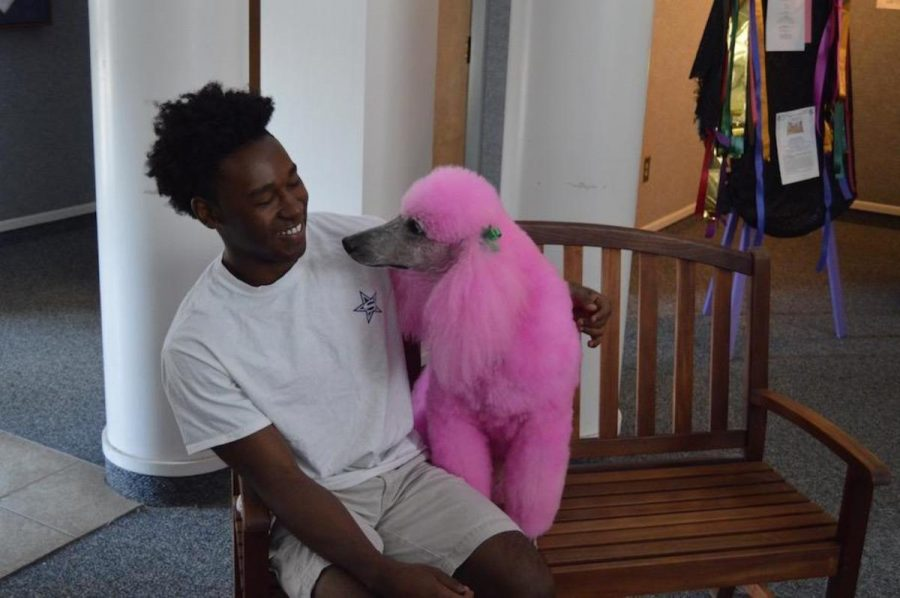 Blossom, the Pink Poodle, is a rock star during visit to Stratford