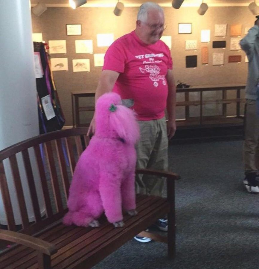Owner Paul Williams was gracious with his time in bringing Blossom to Stratford on Thursday.