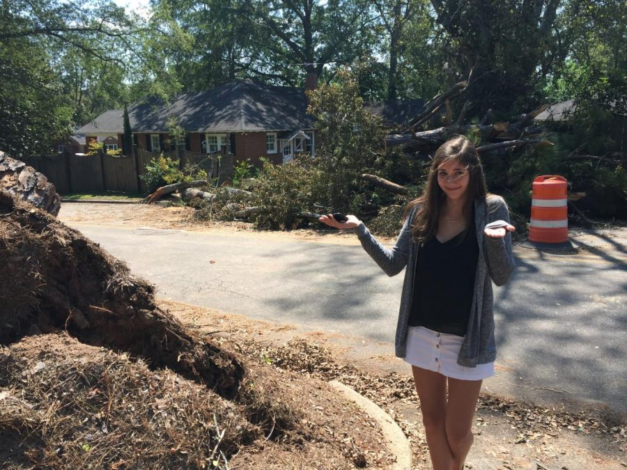 Junior+Maggie+McCullough+stands+next+the+stump+of+a+large+pine+tree+that+fell+in+her+front+yard+on+Overlook+Avenue%2C+crushing+a+neighbor%27s+fence.
